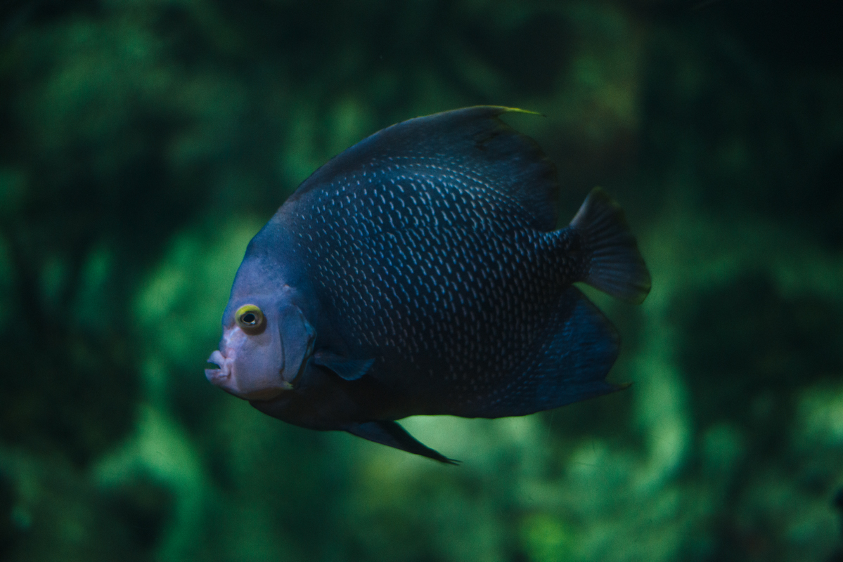 Yellow Eyed Fish 3 blog