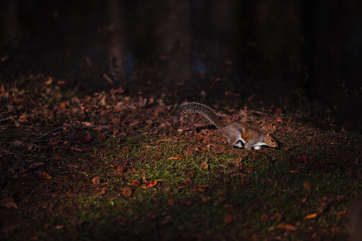 Secret Squirrel 1 blog