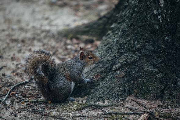 Squirrel 1 blog