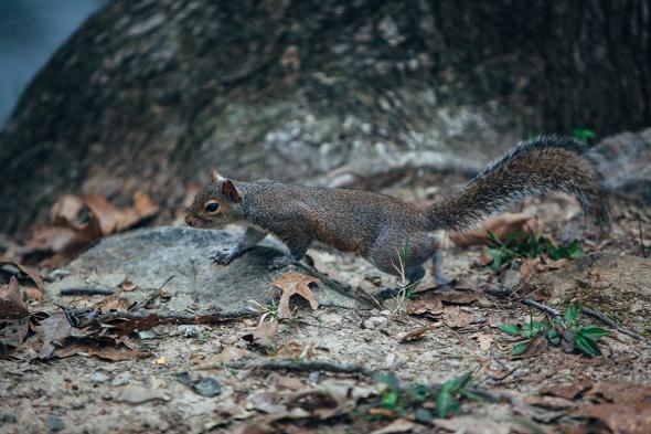 Squirrel 4 blog