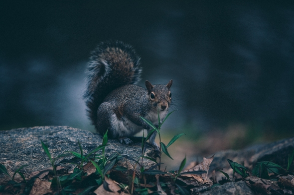 Squirrel 5 blog