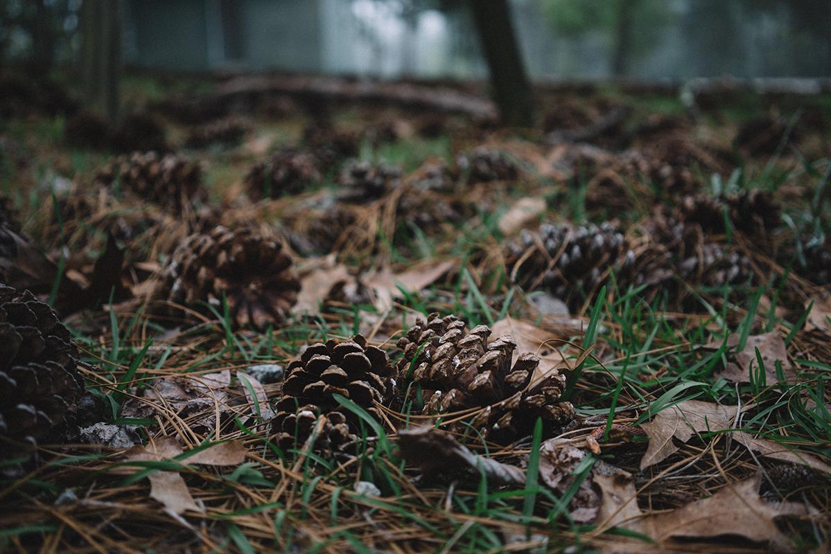 acorns everywhere 1 blog