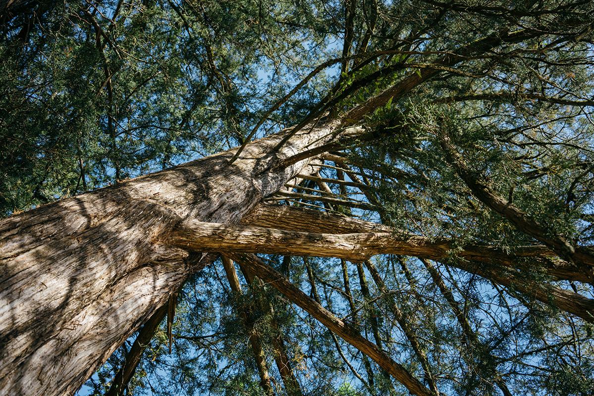 real big tree 1 blog