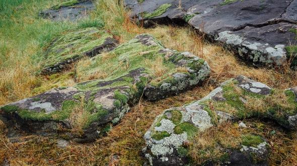 moss widescreen 2 blog