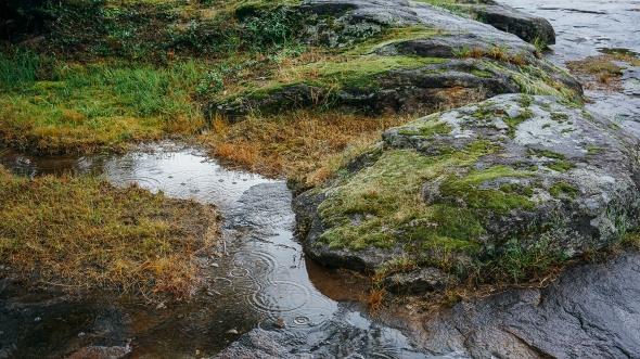nature moss widescreen 2 blog