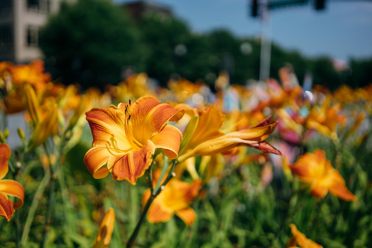orange flowers 6 blog