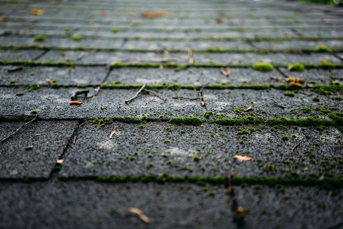 rooftop moss blog